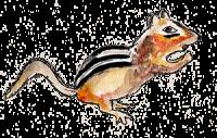 Watercolor Chipmunk